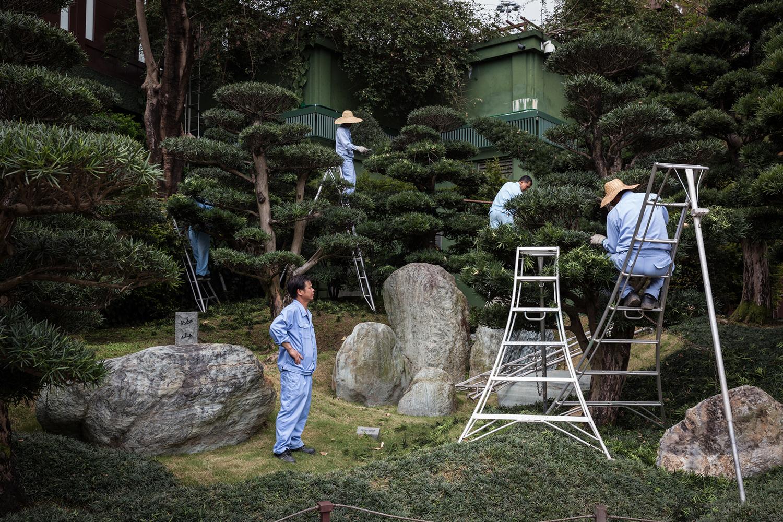 Des jardiniers à l'oeuvre sur des bonzais dans les jardins de Nan Lian.